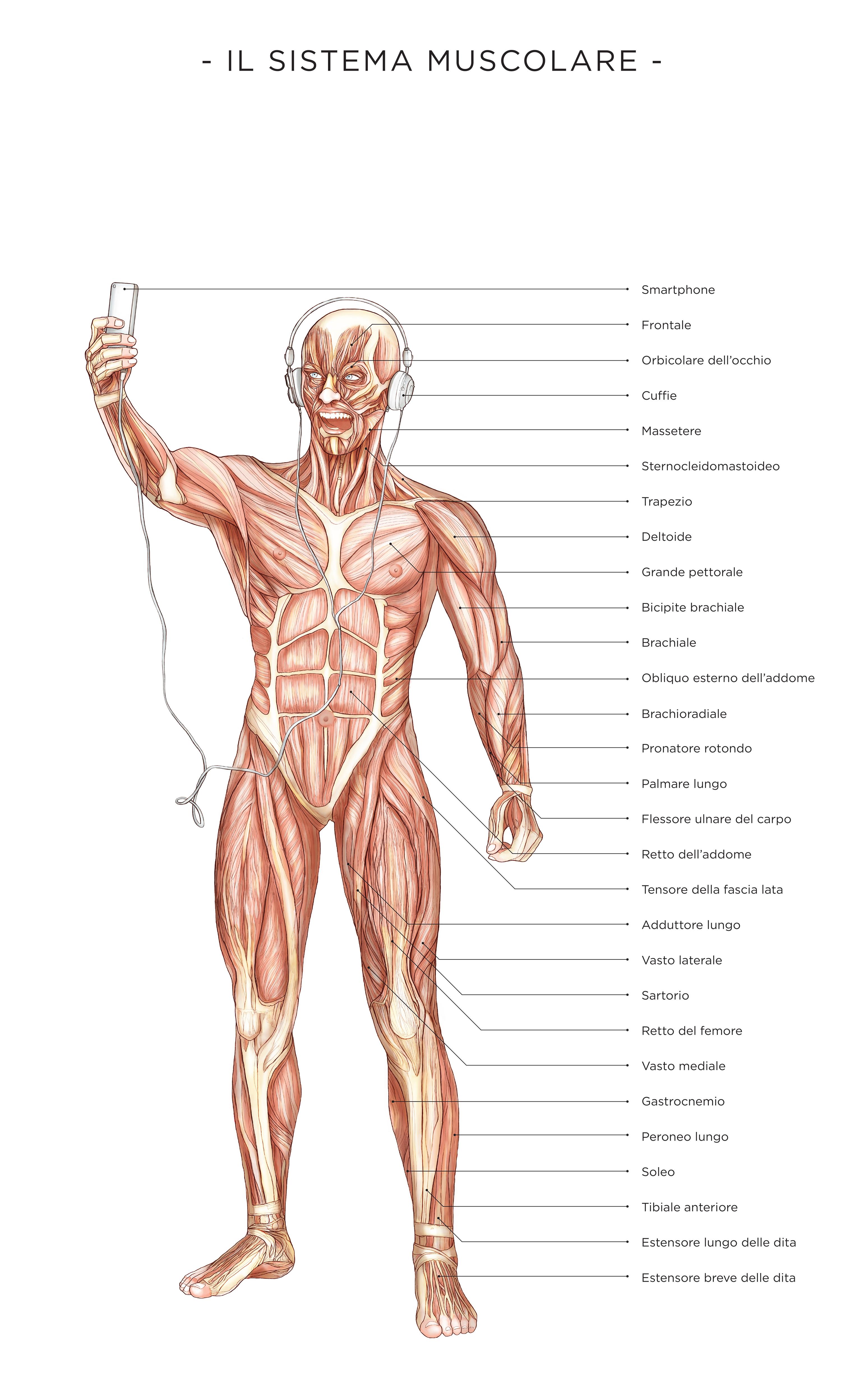 Muscolar Man